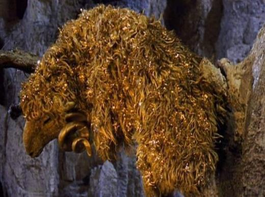 Golden_Fleece_5464.jpg